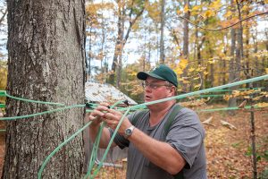 Man connecting maple syrup tubing to trees.