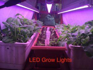 Seedlings growing under LED grow lights