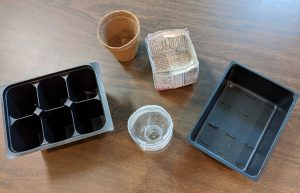 a variety of containers for growing seedlings
