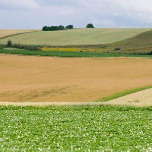 potato and grain fields