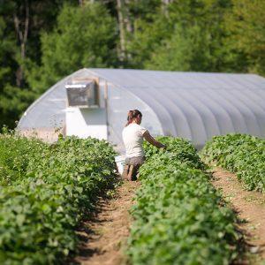 farmer tending to crop