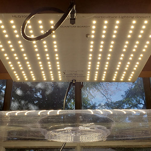 LED light being used to germinate seeds
