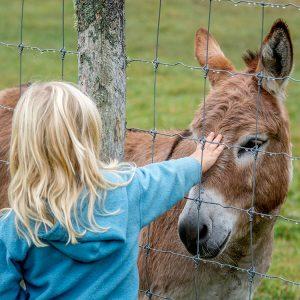 girl patting donkey