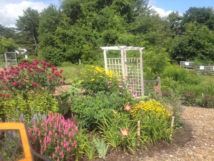 perennials in the cottage garden