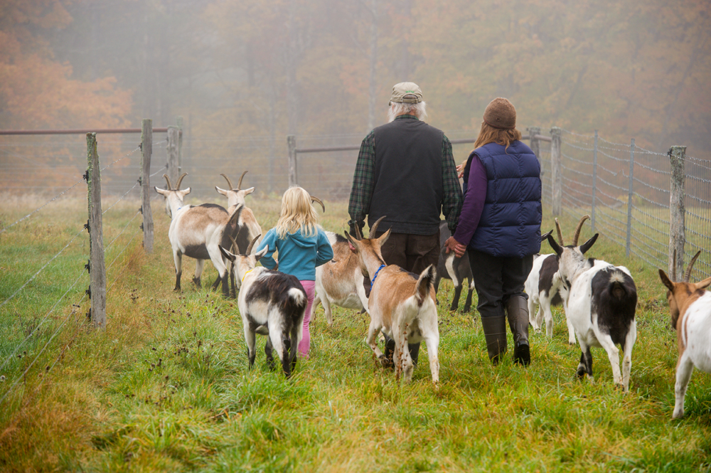 farm family and goats in foggy pasture