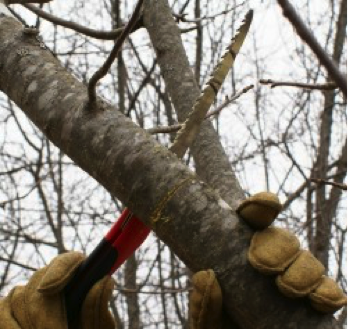sawing a tree branch with a hand saw