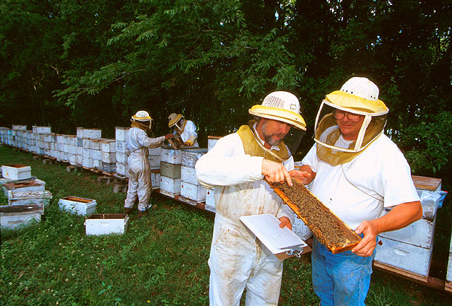 beekeepers inspecting bee hives