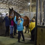 4-Hers learn about caring for horses at Witter Farm