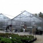 O'Donal's greenhouse