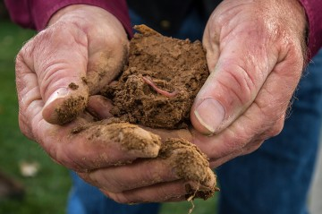 two hands holding healthy soil with worm in it
