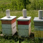 3 Wooden Beehives in field