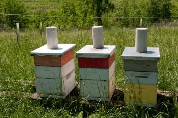 3 Wooden Beehives in field