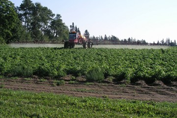 Tractor spraying pesticides on potato field, Aroostook County, Maine