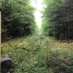 A right-of-way for an underground gas pipeline through the forest that is becoming overgrown