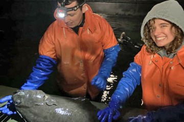 Researchers with a flounder