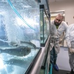 Biocontainment Research Scientist, Andy Holmes, helps a student with aquatic animal husbandry techniques in the Aquatic Animal Health Lab in Orono
