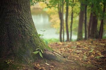 tree-569275_640