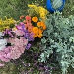 Freshly cut flowers