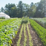 hoophouse and rows of produce