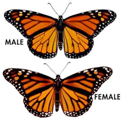 Black male vs three black women 6