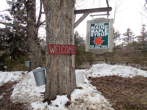 A sign advertises maple syrup for sale.