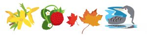 Signs of the Seasons logo. Forsythia, strawberry, maple, and loon.