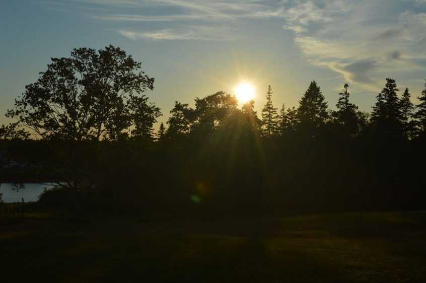 Sunrise over the trees