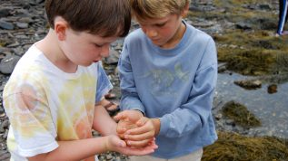 2 boys explore marine life along the shore