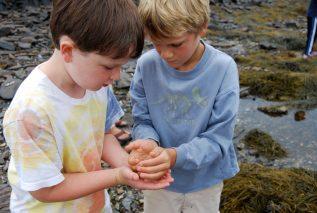 2 boys explore marine life along the shore