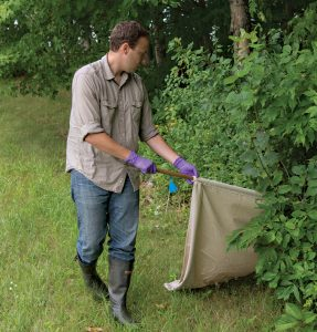 Researcher drags for ticks near the tree line