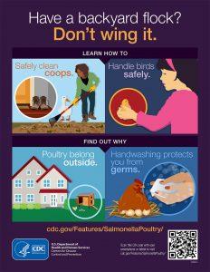 Screen shot of CDC backyard flock poster