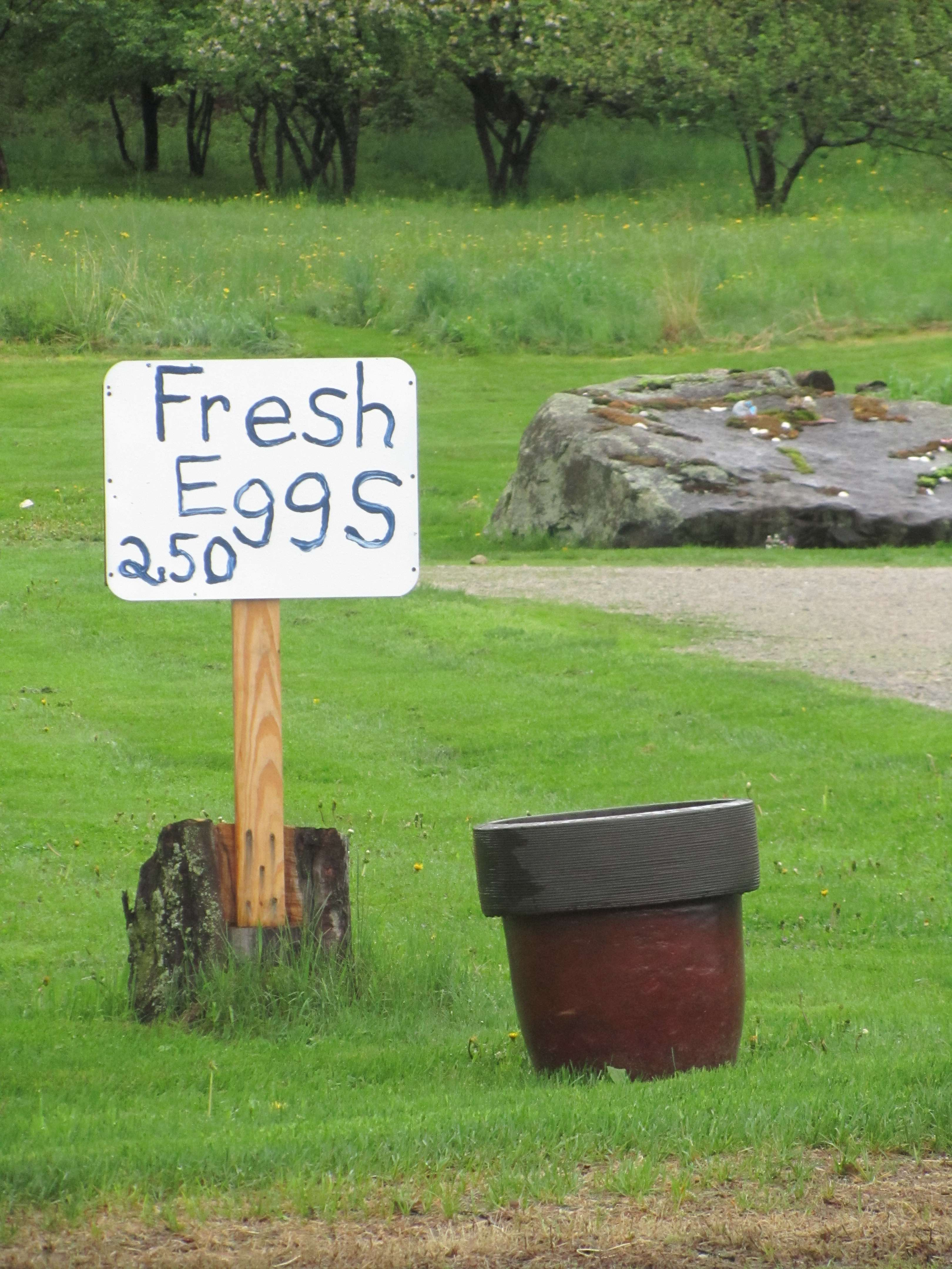Fresh Eggs $2.50 Sign at small chicken farm