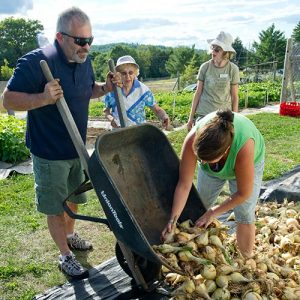 Master Gardener Volunteers collect onions to distribute to hungry Mainers through the Maine Harvest for Hunger program