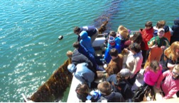 School youth participated in a field trip to a kelp farm.