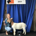 4-H member Cali shows a goat at Northeast Livestock Expo.