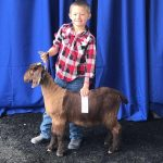 4-H member Kiigan shows a goat at the Northeast Livestock Expo.
