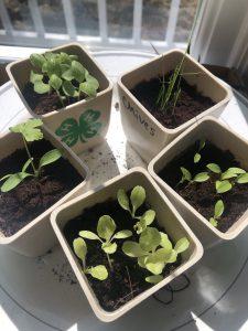 4-H Herb Garden