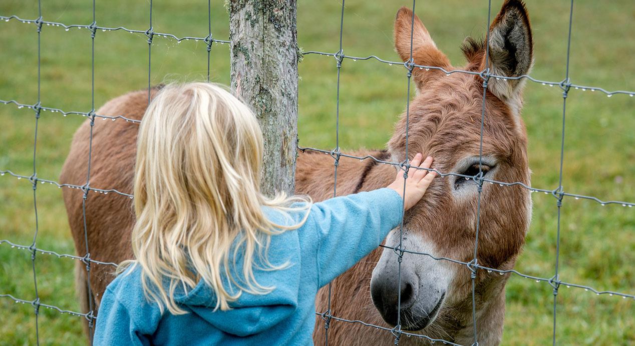 girl with donkey
