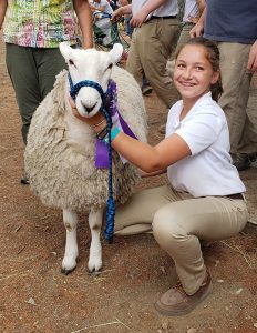Boots and Buckles 4-H Club member showing her sheep.
