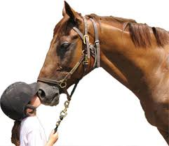 4-H girl with horse