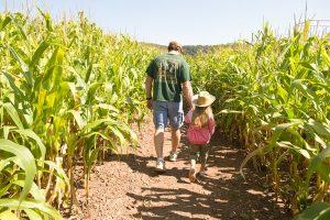 Man walking with a little girl through a corn maze